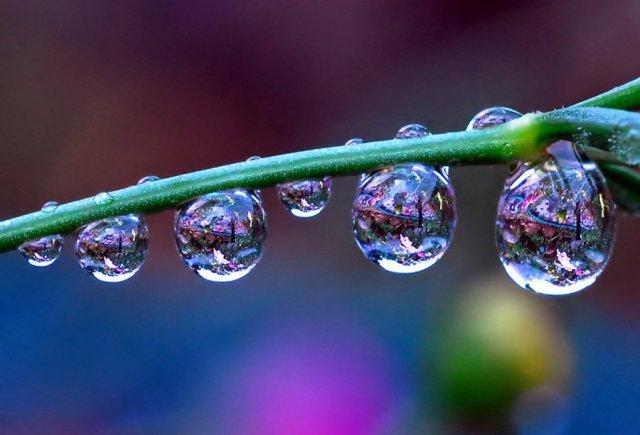 Flowers-in-Water-Drops-Photos-15.jpg