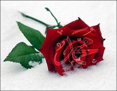 islam-jeune-vip-blog-com-781282634740965.jpg