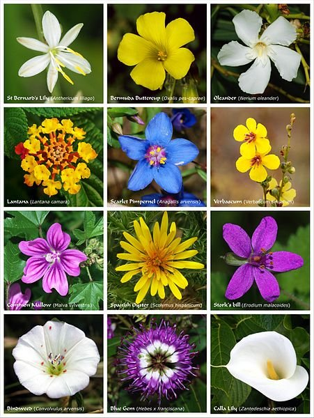 451px-Flower_poster_2.jpg