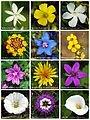 90px-Flower_poster_2.jpg