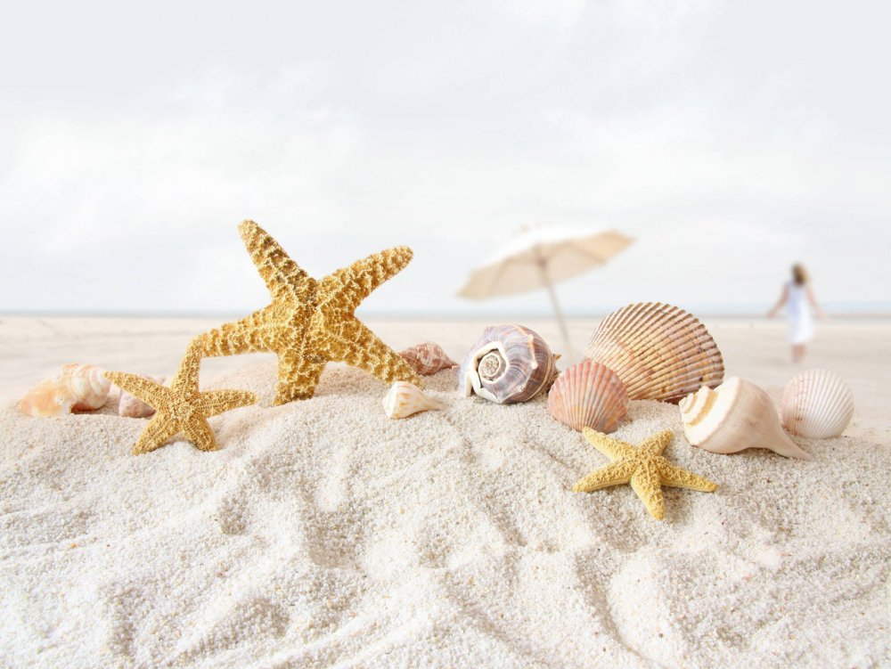 8-star-fish-sea-shell-beach-wallpaper.jpg