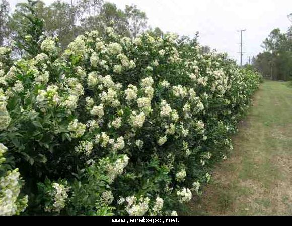 aaaa14594 مُتميّز ||.. موسوعة الأزهار والورود وأسمائها ومعلومات عنها .. - صفحه ...