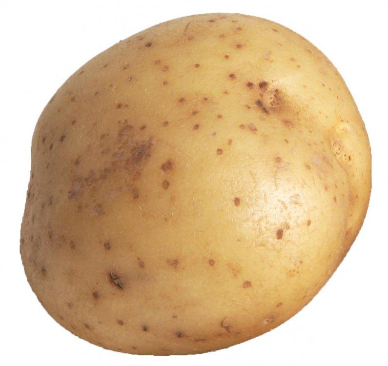 potato-bullet.jpg