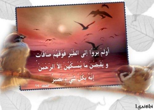 mno3at-islam4m.com32.jpg