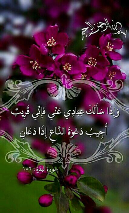 وَإِذَا سَأَلَكَ عِبَادِي عَنِّي فَإِنِّي قَرِيبٌ ۖ أُجِيبُ دَعْوَةَ  الدَّاعِ إِذَا دَعَانِ ۖ فَلْيَسْتَجِيبُوا لِي وَلْيُؤْمِن… | Holy quran,  Quran, Quran verses