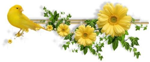 ربما تحتوي الصورة على: زهرة ونبات