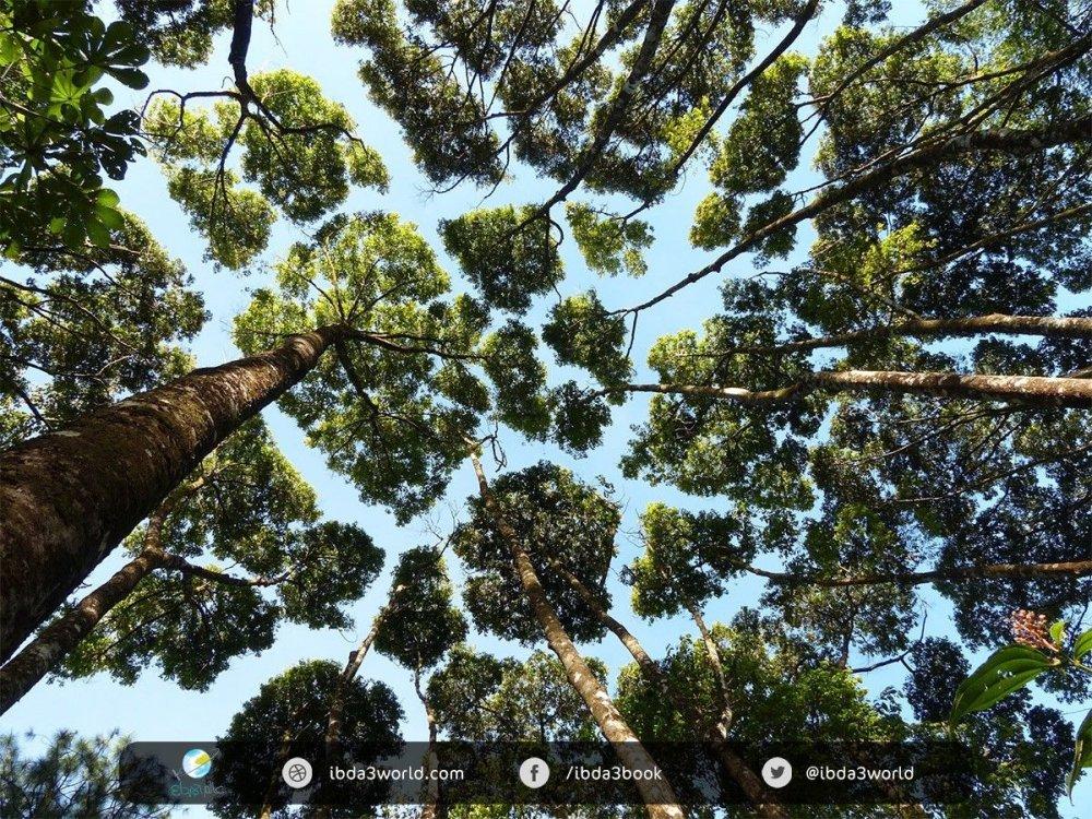 trees-5.jpg
