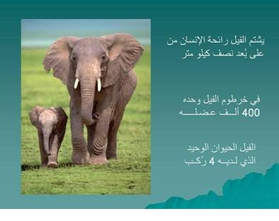 صور مفيدة  للحيوانات akhawat_islamway_136