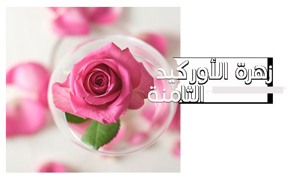 akhawat_islamway_1420391395___8.png