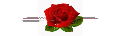 akhawat_islamway_1445946065___3.png