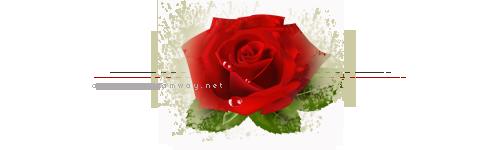akhawat_islamway_1445946087___4.png