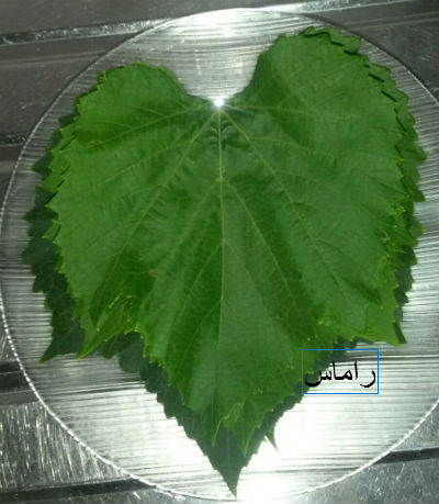 akhawat_islamway_1456783535__1.jpg