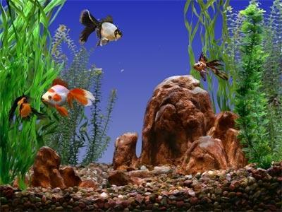 أروع صور لاسماك الزينة تجدها هنا Post-119297-1266350777