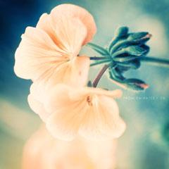 flower__24_.jpg