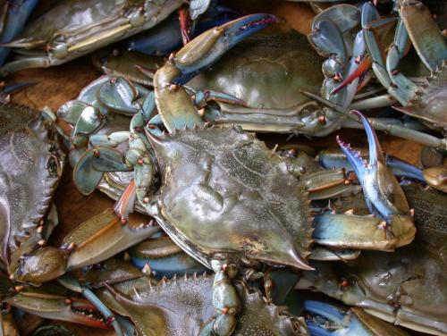 Blue_crab_on_market_in_Piraeus___Callinectes_sapidus_Rathbun_20020819_317.jpg