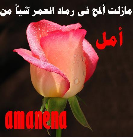 post-106221-1278699478.jpg