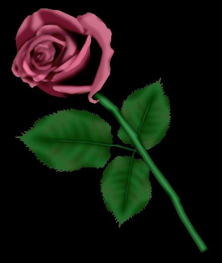 احدث ملحقات الفوتوشوب 2019سكرابز أزهار post-97886-125778336