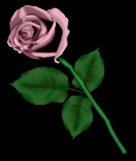 احدث ملحقات الفوتوشوب 2019سكرابز أزهار post-97886-125778337