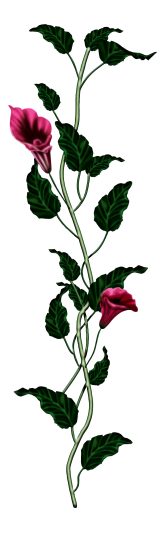احدث ملحقات الفوتوشوب 2019سكرابز أزهار post-97886-125778387