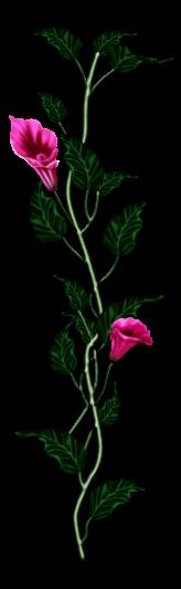 احدث ملحقات الفوتوشوب 2019سكرابز أزهار post-97886-125778393