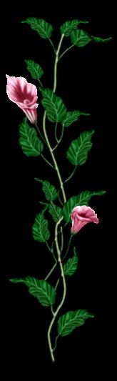احدث ملحقات الفوتوشوب 2019سكرابز أزهار post-97886-125778395