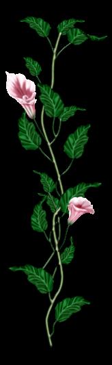 احدث ملحقات الفوتوشوب 2019سكرابز أزهار post-97886-125778397