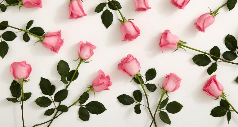 2-1_history-pink-roses_mainhero (1).png