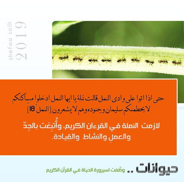 النمل.jpg