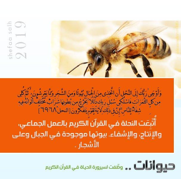 النحل.jpg