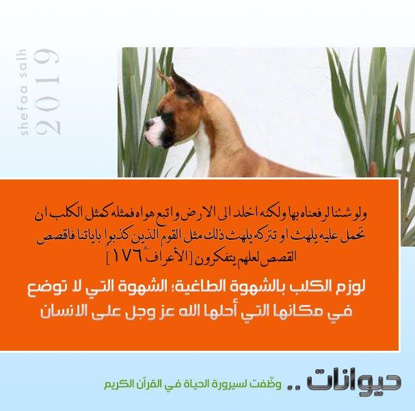 الكلب.jpg
