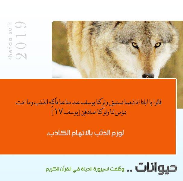 الذئب.jpg