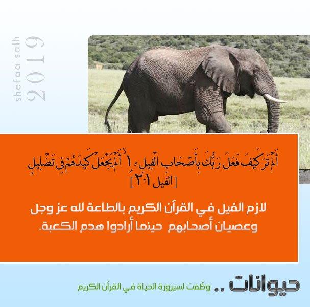 الفيل.jpg