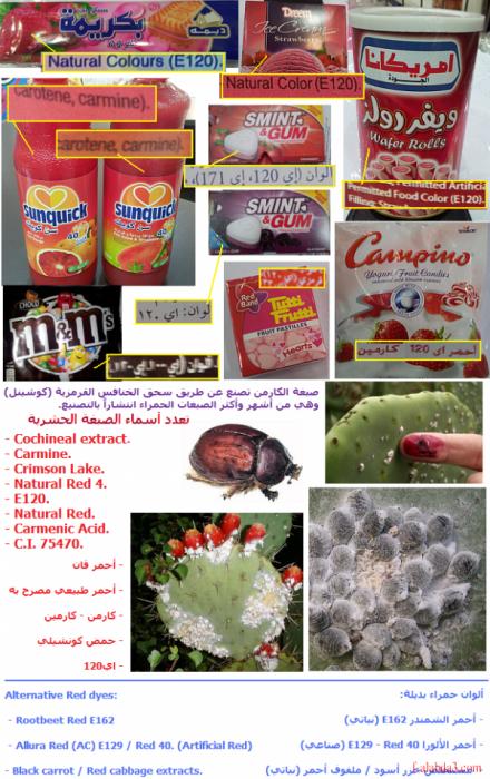 الغذائي e120. msg-17499-0-57173900-1392914463_thumb.png