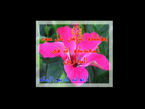 post-26107-1207798640_thumb.jpg
