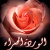 (أخوات طريق الإسلام)
