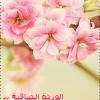 الوردة الصافية