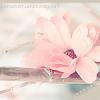 *زهرة اللوتس*